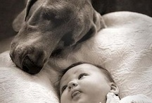 Love for dogs / by Jeanette Williamson