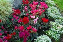 Emilee's gardening / by Kelly Foss-Railsback