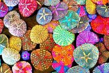 Colorful Life / by Shelle Winkler