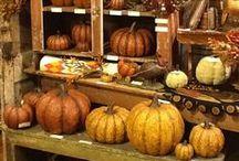 Halloween/Fall Decor / by Carol Bridegroom