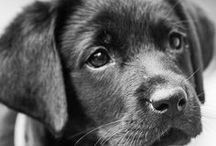 Animals / by Anna Gracen Dougherty