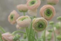 Plantings / by Laura Hudson