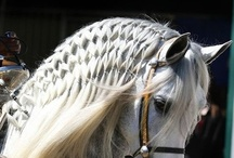 Manes and Tails / by Equine Facility Design