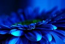 BLUE / by Haute Curvy Woman
