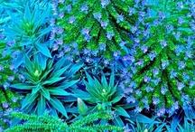Gardens of Eden / by Vered Gabay