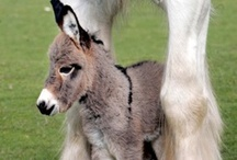 Donkey / Donkey inspiration for Project Isabella Graphic Workshop for developing our clipart, graphics to buy individually, zipped or as craftartist digikit #craftartist / by Project Isabella