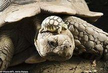 turtle island feels / by Sea McKee