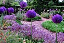 Gardening/Outdoor Living / by Cheryl Takata