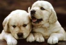 Pets and God's other precious creatures / by Macy's Mom