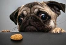 Awww! / Pugs, pugs, and more pugs! / by Debbie Reeves