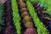 gardening & yard ideas / by Emily Whiting