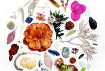 Nature Collections by State / A collection of nature treasures from every state. / by Evie S.