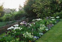 Gardening ideas / by Meagan Charron