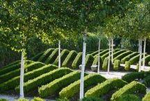 Plant Showcase / by Norma de Langen   Daisy Loves Design
