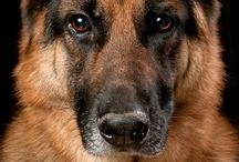 dogs / by Sandy Stultz James Patrick