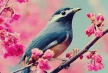 Spring / by Chriseda Howard