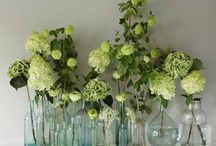 hydrangea / by V and Co.