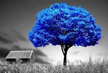 Shades of Blue / by Donatile Quartararo Ruscito