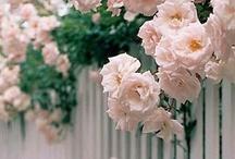 Neighborhood Florals / by The Neighborhood