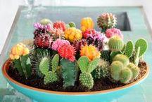 This Idea: Garden/Plant / by Katrin Sticha