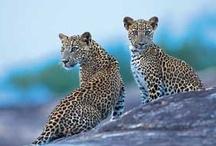 Yala National Park / by Secret Lanka