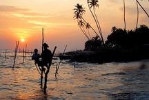 Stilt Fishermen / by Secret Lanka