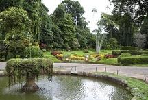 Peradeniya Botanical Garden, Kandy, Sri Lanka / by Secret Lanka