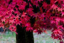 Autumn / by Karen Dunham