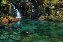 Oregon  / by Debbie Baker
