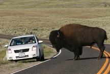 '09 road trip  w/ clark's / by Debbie Baker