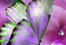 Pretty lil things! / by Sherry Bardone