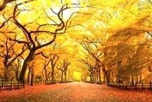 fall treats / by Ashley Roberts