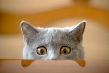 Cats - Katzen / by Constanze Wolff