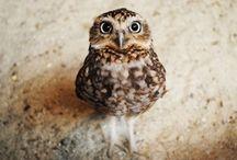 Eulen - owls / by Constanze Wolff