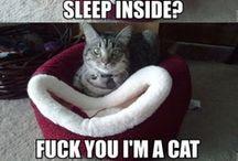 Pet humor / by Catherine Locke