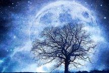 Moonlight / by Catherine Locke