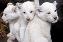 Baby animals / by Catherine Locke