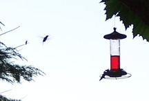 Humming birds / by Janice Seagraves