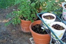 My Container Garden / I'm trying my hand at a container garden this year / by Janice Seagraves