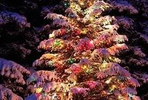 Seasonal / by Sarah Finley