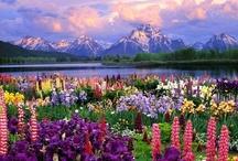 My Beautiful Colorado / by Katrina Short
