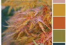 Color Combos.............. / by Debbie Slavin