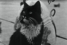 The cats of Downing Street / by UK Prime Minister