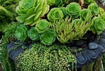 Green Thumb / by Lynn Ackerson