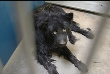 The Animals board / If I save even one life it's all been worthwhile. Please repin and pass on adoptables to those you know. The more people that are informed, the more people there are that can make decisions in the way they coexist with and treat animals / by Leah Rosch