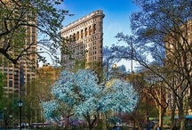 New York / by Francini Andino