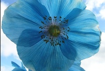 Garden Joy! / by Roz Liming