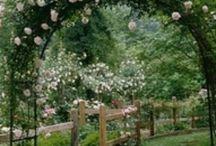 My  Yard & Garden / by Carriage House Rest, LLC