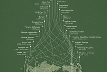Infographics / by Marina Waltz