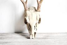 «----∆∆ Animal Skulls ∆∆----» / Animal skulls, horns and antlers / by Hannah Adamaszek